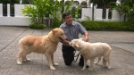 【犬猫動物動画まとめ】K-9 security pioneer still training dogs