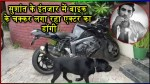 【犬猫動物動画まとめ】Sushant Singh Rajput Dog Fudge Roams Around Late Actors Bike