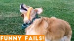 【犬猫動物動画まとめ】TRY NOT TO LAUGH at FUNNY PET FAILS 2018 _ Funny Pet Videos