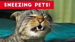 【犬猫動物動画まとめ】Try Not To Laugh At These Sneezing Pets & Animals of 2017 Compilation _ Funny Pet Videos