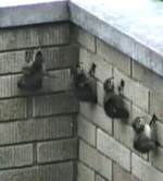【犬猫動物動画まとめ】Wow! How can baby ducks climb such a high...