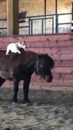 【犬猫動物動画まとめ】Blind Dog Jumps on Horse's Back and Rides Them