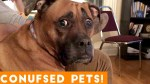 【犬猫動物動画まとめ】Funniest Confused Pets Compilation 2020