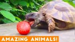 【犬猫動物動画まとめ】The Most Amazing Animals on Earth Compilation 2018
