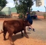 【犬猫動物動画まとめ】Basketball Playing With Cow