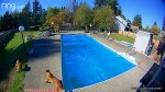 【犬猫動物動画まとめ】Rowdy Pooch Sprints Across Pool Cover