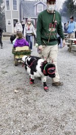 【犬猫動物動画まとめ】Newfoundland Happily Tows Wagon Along
