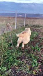 【犬猫動物動画まとめ】Dog Takes A-fence Playing With Cat
