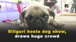 【犬猫動物動画まとめ】Siliguri hosts dog show, draws huge crowd