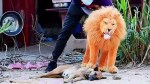 【犬猫動物動画まとめ】Troll Prank Dog Funny _ fake Lion and Fake Tiger Prank To dog _Huge Box Prank to dog _ Ep53_Tro