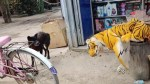 【犬猫動物動画まとめ】Wow!!! Nice Fly Dog!!! Fake Tiger Prank Dog Run So Funny Try To Stop Laugh Challenge