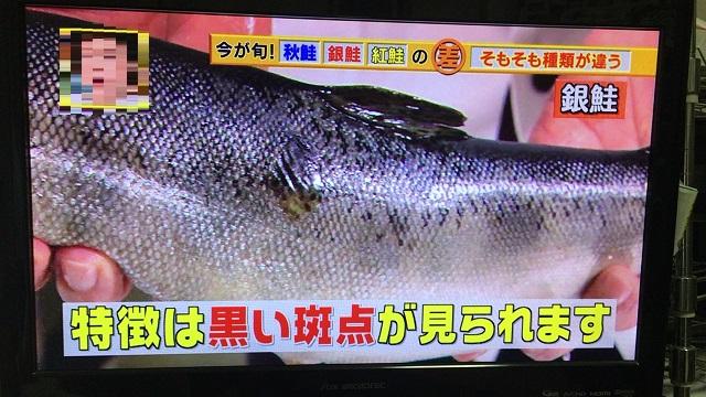 銀鮭の特徴は黒い斑点