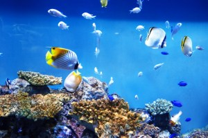 熱帯魚の水槽の温度