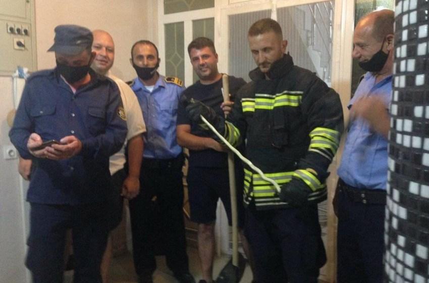 Shirokë: Gjarpëri futet në shtëpi, intervenojnë zjarrfikësit