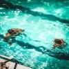 水泳は個人競技だけど仲間が大切な理由