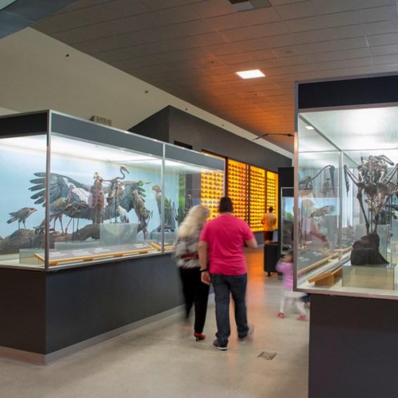 Tar Pits Museum birds display
