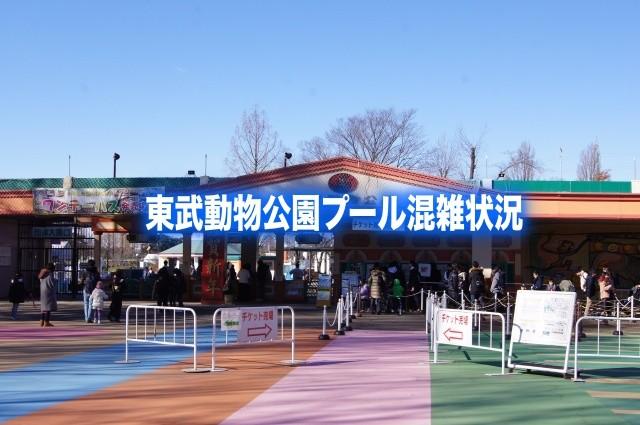 【東武動物公園プール混雑状況2019】7月~9月の平日&お盆混雑回避!テントは必要か