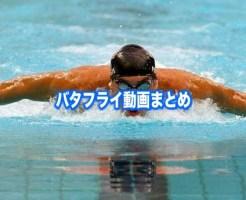 バタフライ 泳ぎ方 動画