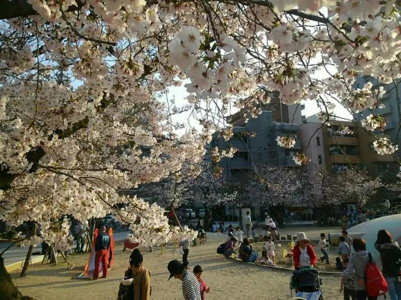 すっかり春の陽気~♪吹田市内桜の名所の開花状況をお知らせします~