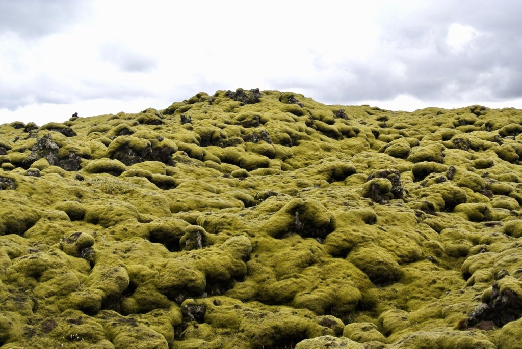 Thick green moss, sometimes as deep as 50 centimetres, covers the lava flows as far as the eye can see in south Iceland.