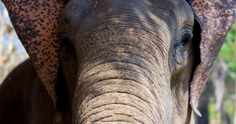 Suitcase Six ELEPHANT-1 Encountering Elephants Ethically.