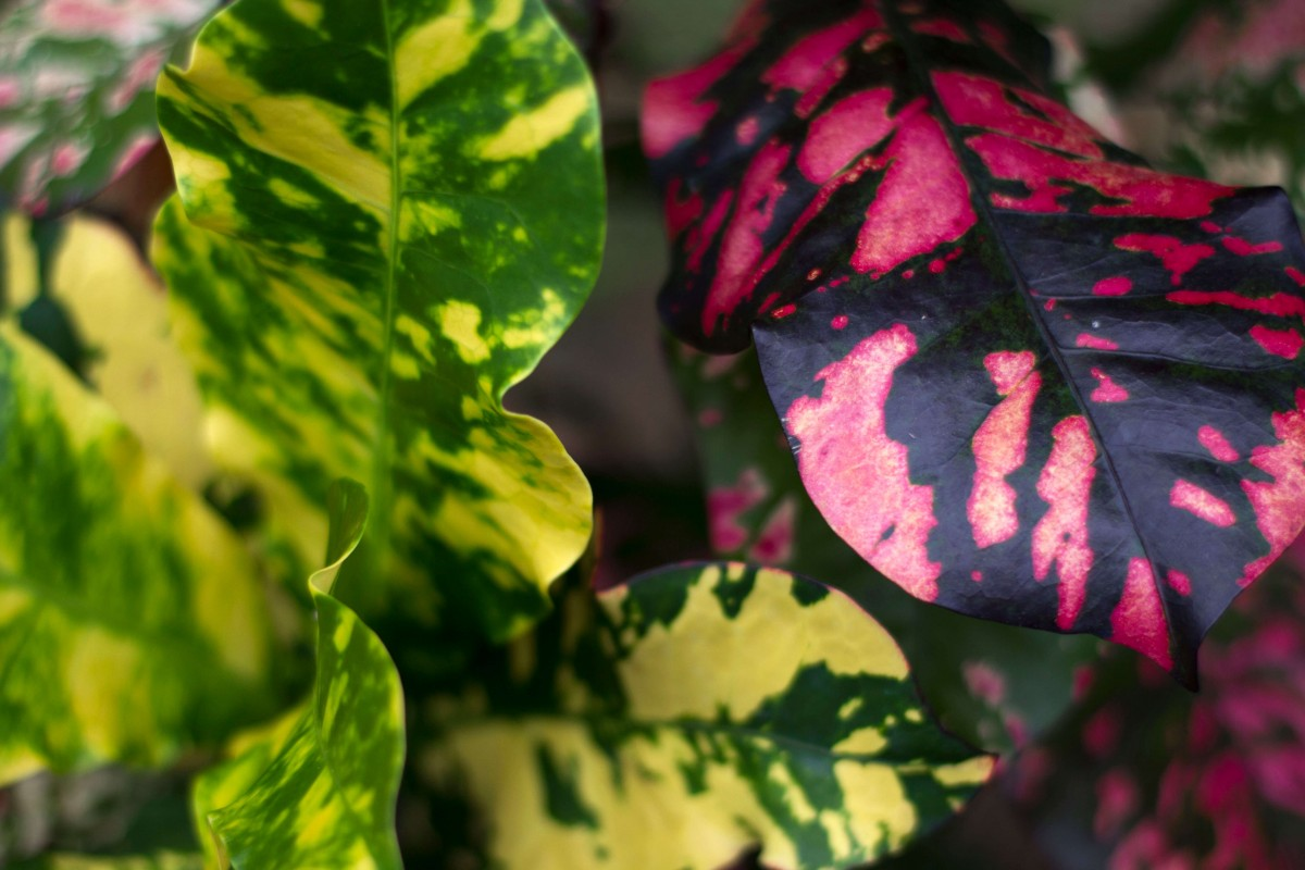 colorful leaves of lime and pink