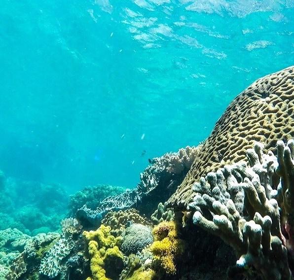 Suitcase Six apo-island-sea-corals-2 8 Environmentally Friendly Adventures to Discover Around the World