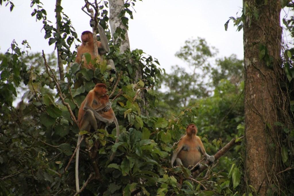 Suitcase Six Proboscis-monkeys-1024x683 8 Environmentally Friendly Adventures to Discover Around the World