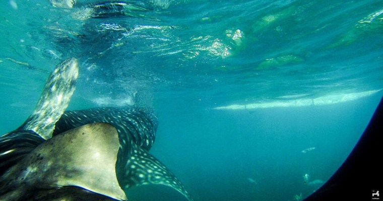 Suitcase Six Whale-Shark Ethical Travel Mistakes: 5 Things We Wouldn't Do Again and Their Responsible Alternatives