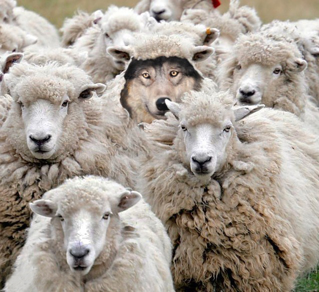a-wolf-in-sheep-clothing