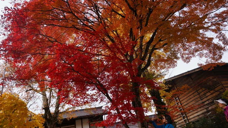 Melihat Shirakawago Dari Dekat 4