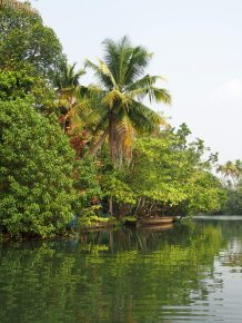 The Backwaters Beckon