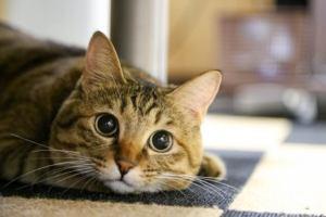 機嫌の悪かった母が猫を邪険にしてしまった時の話