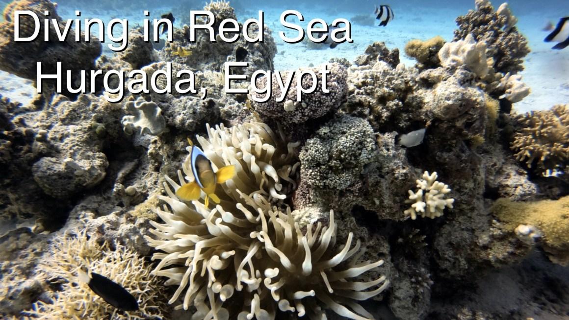 🇪🇬 Египет – 🤿 Дайвинг в Красном море