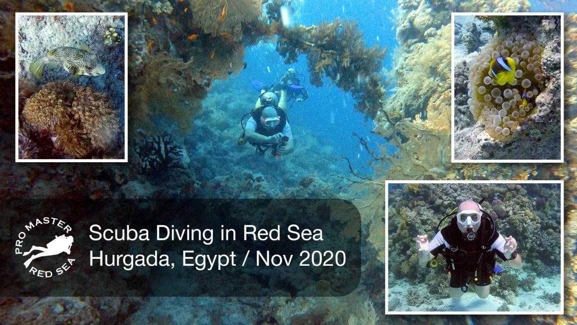 🇪🇬 Египет – 🤿 Дайвинг в Красном море, Хургада (Ноябрь 2020)