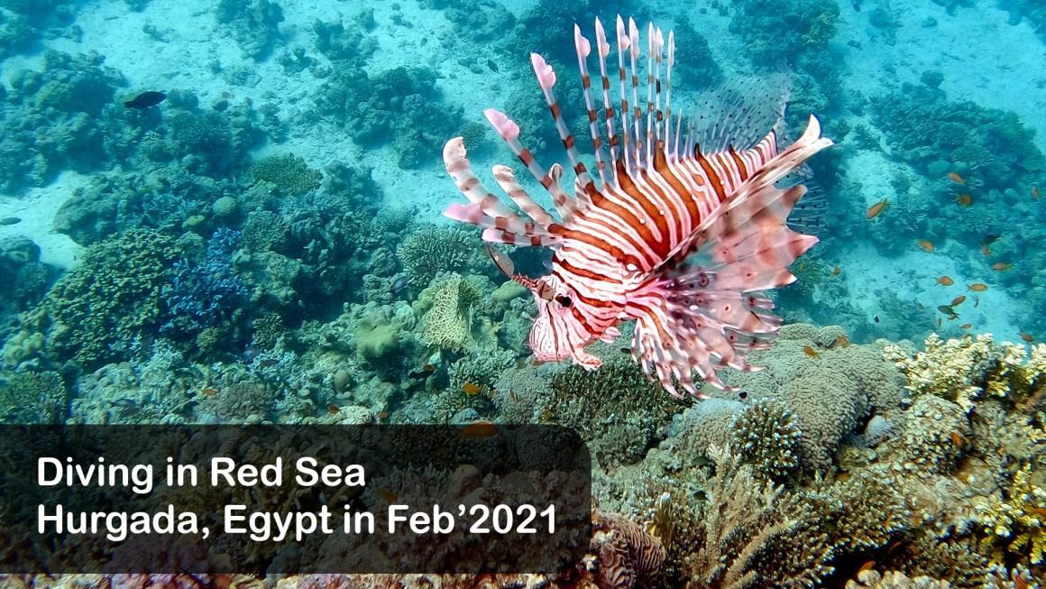 🇪🇬 Египет: 🤿 Дайвинг в Красном море – 2 (Февраль 2021)