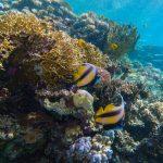 GoPro: Underwater Lightroom Presets