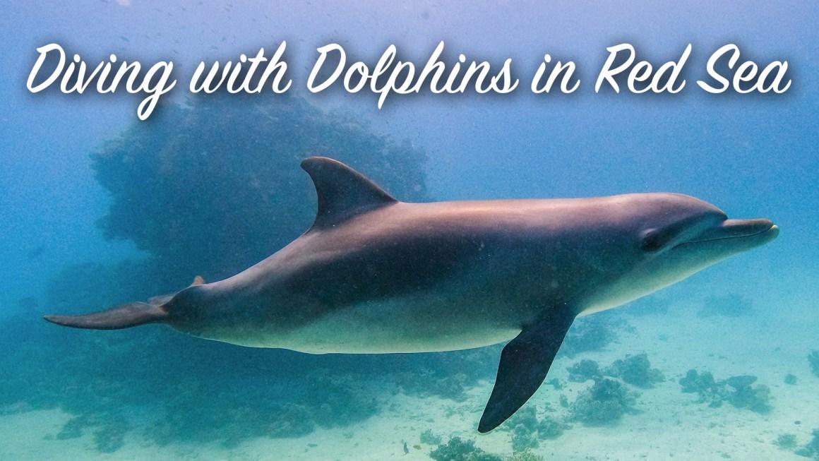 🇪🇬 Египет: 🤿 Дайвинг с дельфинами в Красном море