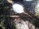 basket building2