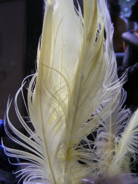 Feathers 1