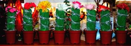 Christmas cactus crackers