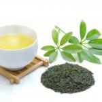 日本茶(緑茶)奥深い魅力を持つ日本茶を楽しむ
