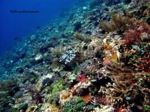 Pulau Ternate (Credit foto oleh Bang Ubun) yang kaya akan tutupan karang lunak
