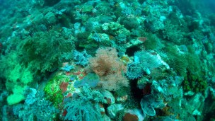 A Beautiful Coral Reef When we were sailing From Maumere to Saumlaki
