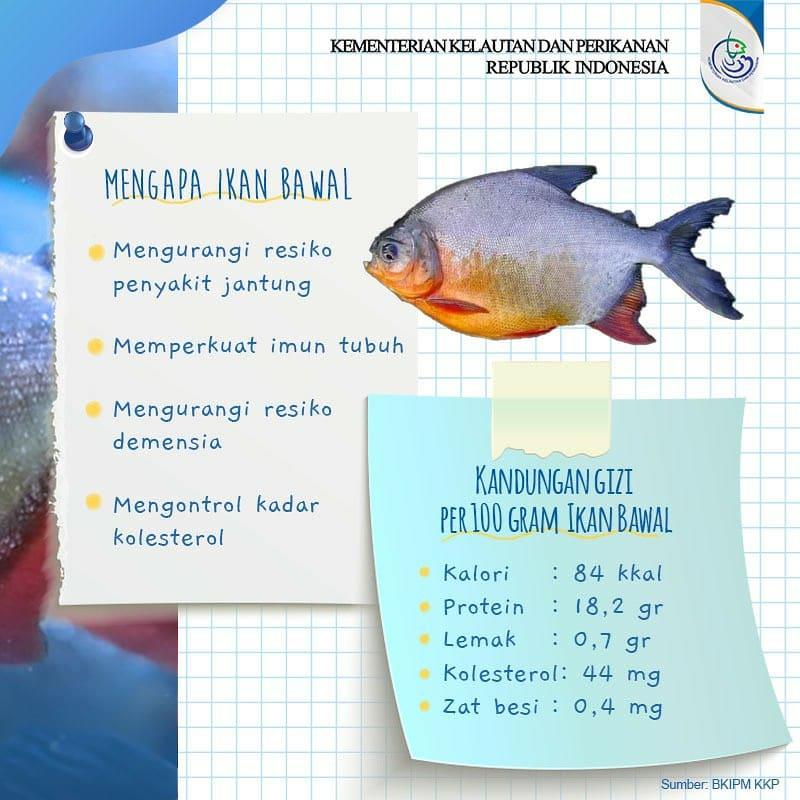 Quick Fact, Ikan bawal