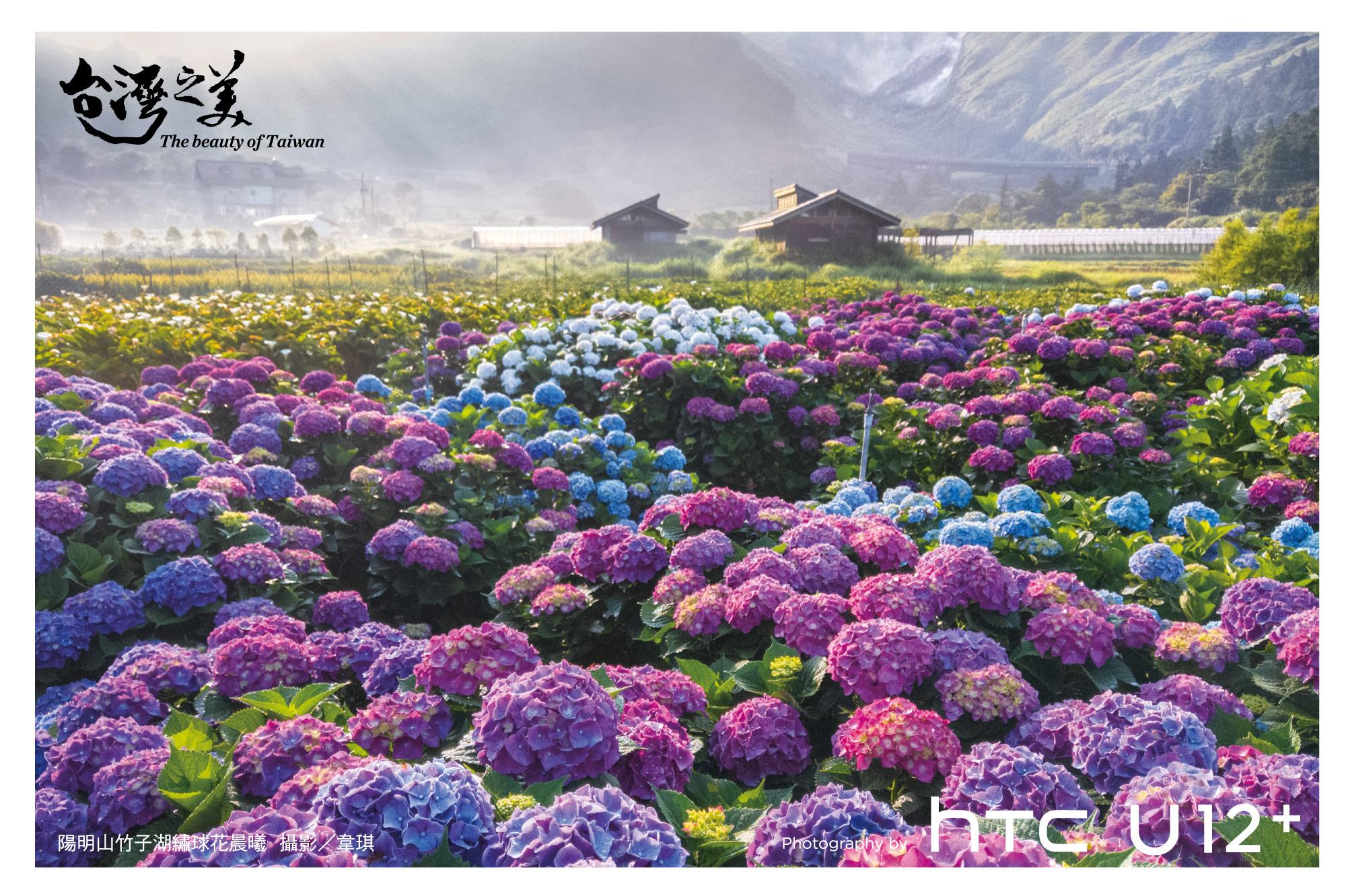台灣之美 台灣小鎮靚點漫遊小鎮之一-陽明山竹子湖繡球花晨曦-由HTC U12+拍攝