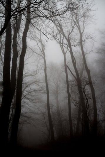 Foto, Wald im Nebel