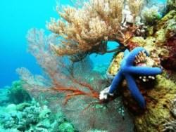 Takabonerate Diving