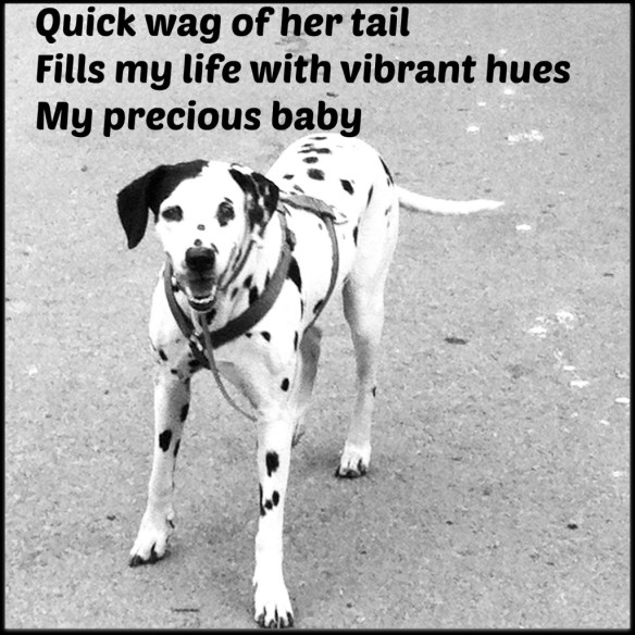Wagging tail