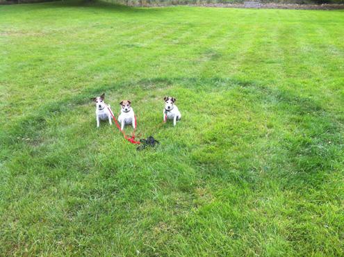 Castle Green Dogs 02